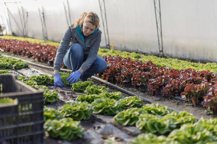 mujer-emprendedora-invernadero-huerto-mundo-rural