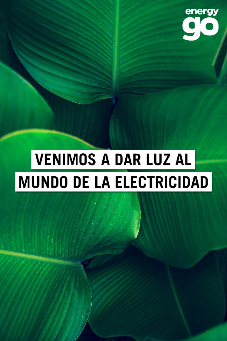 2020-Diciembre-Portada-hojas-logo (1)